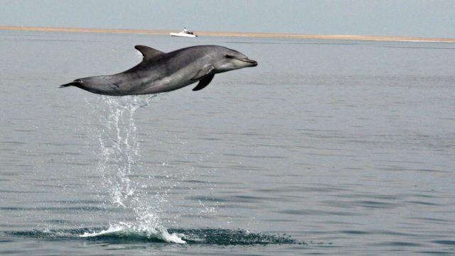 Dolfijnen- en zeehondentour - Namibie