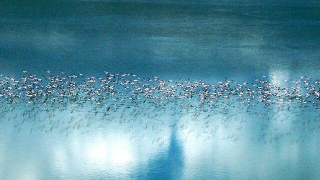 Flamingo migratie Makgadikgadi Pan - Botswana Rondreis Op Maat Specialist