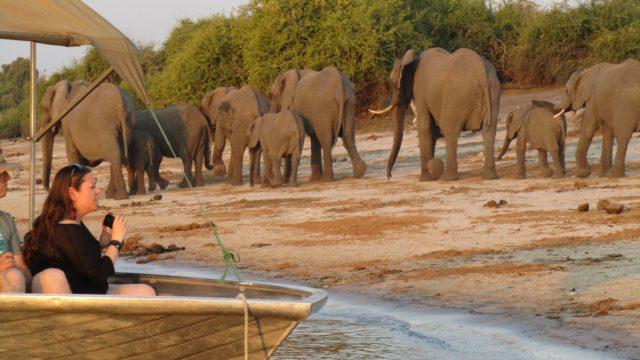 Chobe Park / Kasane Botswana Rondreis Op Maat Specialist