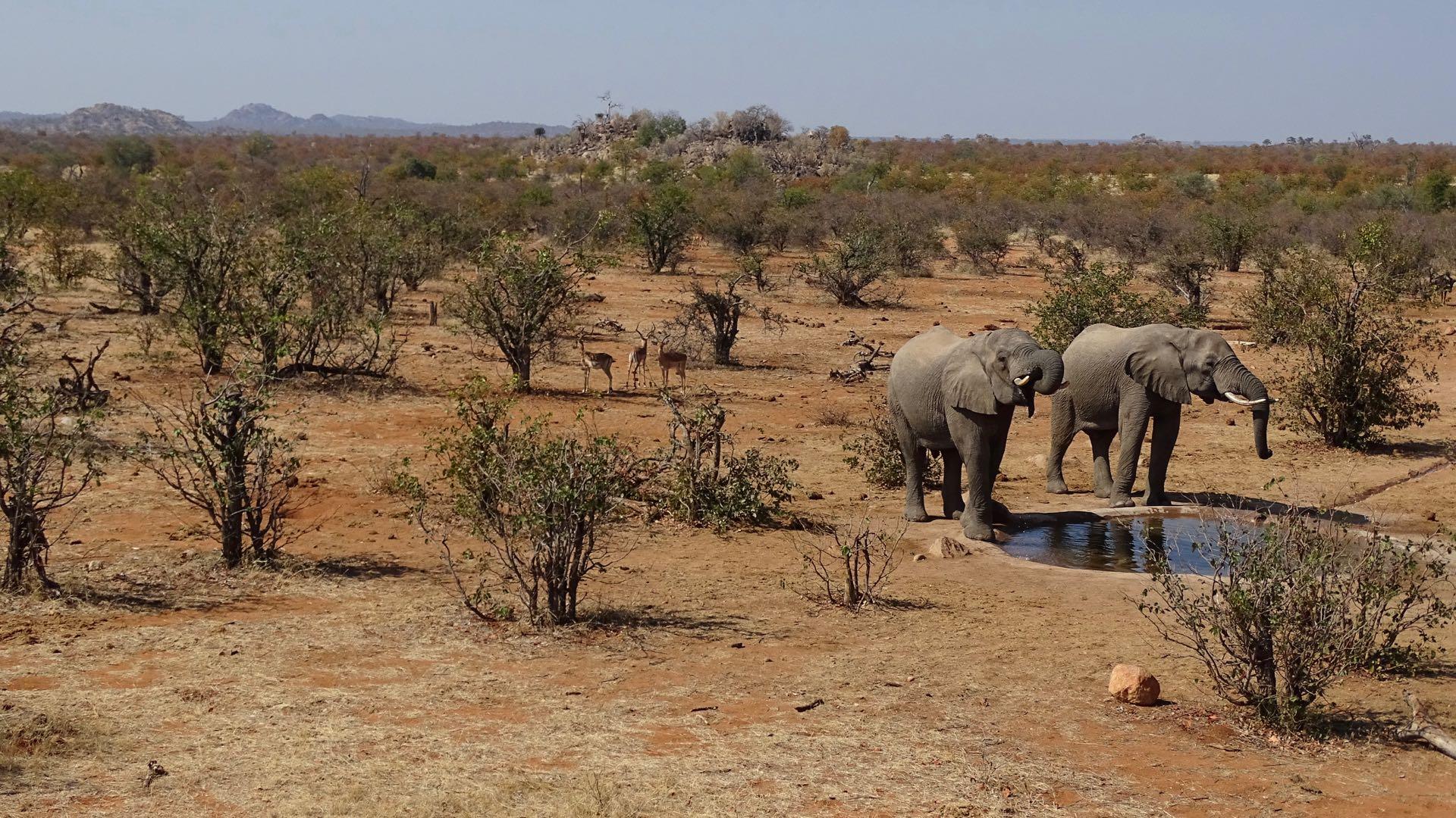 Tuli Block / Botswana