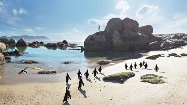 Boulders Beach Kaapstad Zuid-Afrika Rondreis Op Maat Specialist