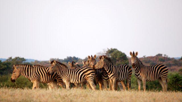 Centrale Kalahari Botswana Rondreis Op Maat Specialist