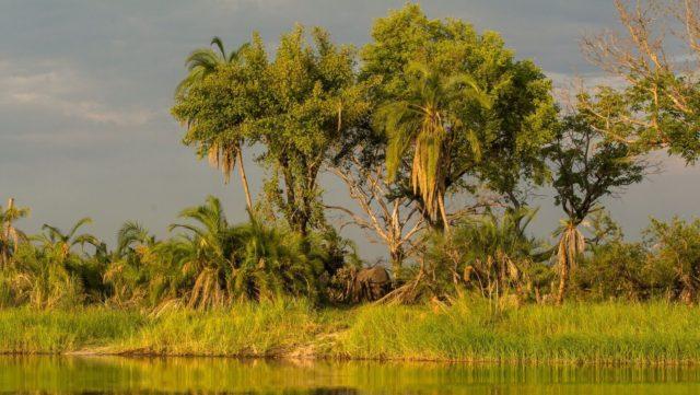 Okavango Delta - Botswana Rondreis Op Maat Specialist Highlights Namibië/Botswana/VicFalls