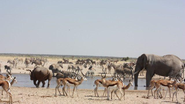 Etosha Park Namibië Rondreis Op Maat Specialist
