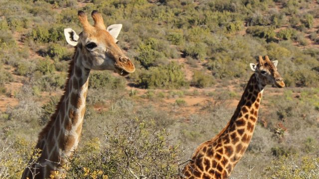 Pilanesberg Nationaal Park