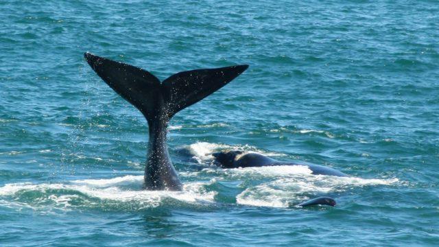 Whales & Sharks coast