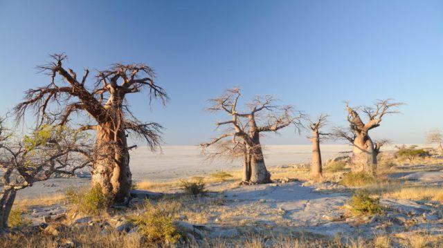 Makgadikgadi Zoutpannen - Botswana