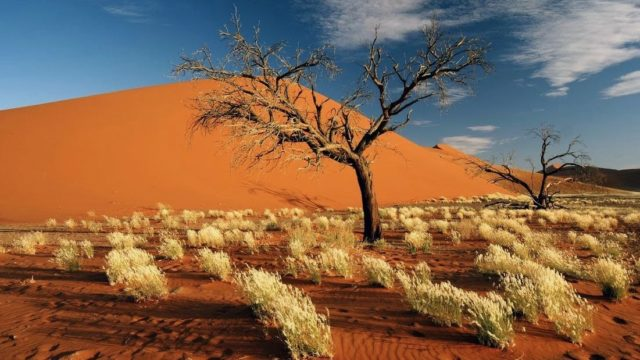 Highlights Namibië via Caprivi naar Victoria Falls