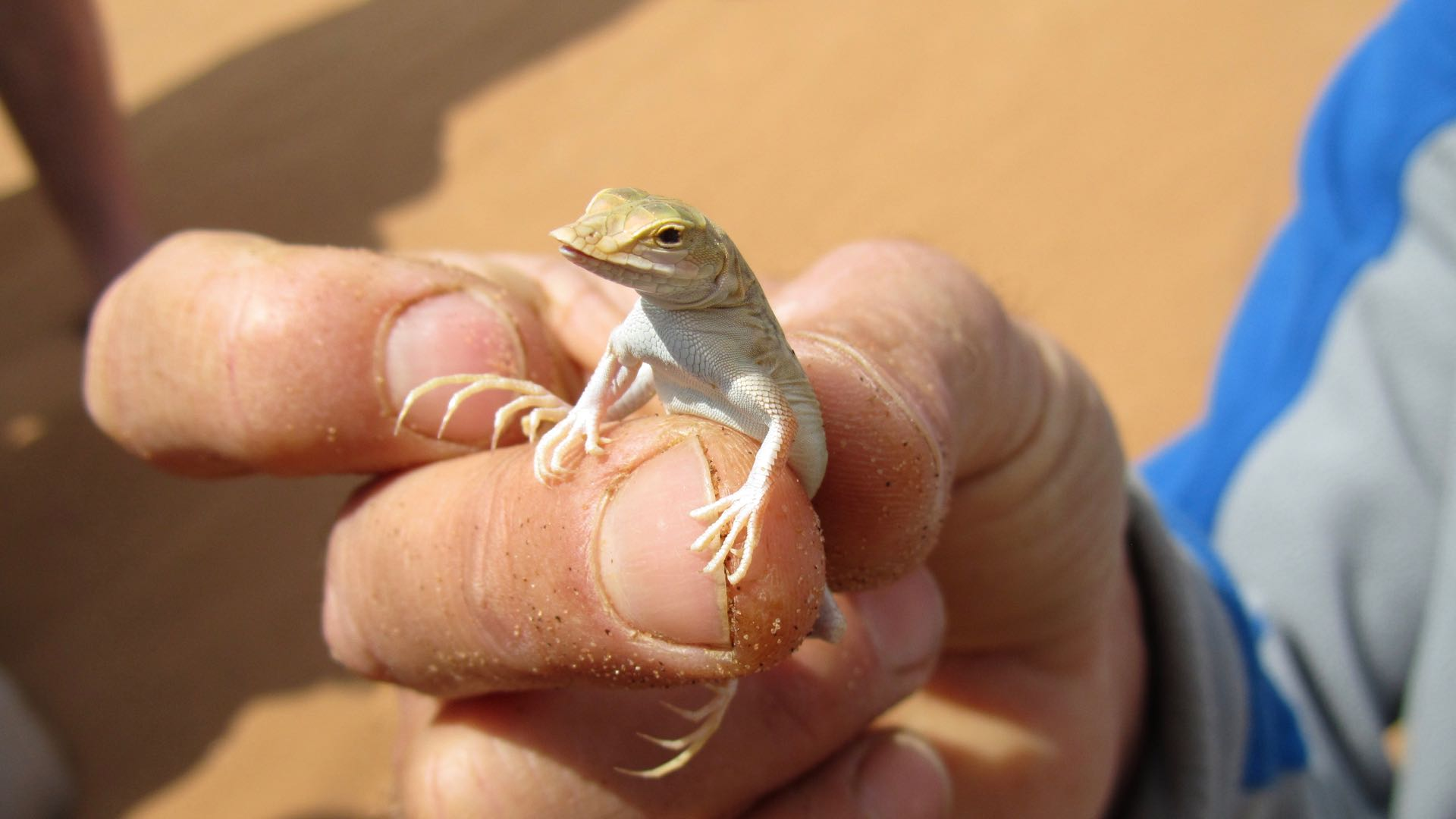 Living Desert Tour Swakopmund - Namibie