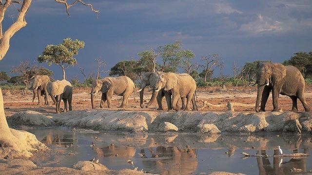 Safari Olifanten aan water mooi maar kwaliteit 640