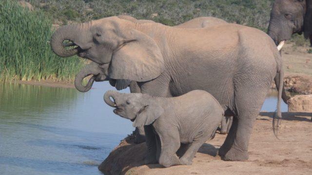 Safari Olifanten Botswana Rondreis Op Maat Specialist