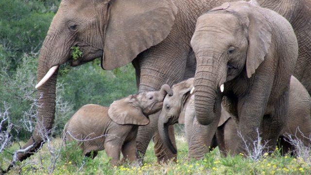Safari Olifanten Rondreis Op Maat Specialist