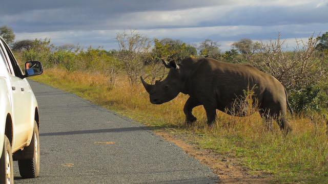 Safari Neushoorn Zuid Afrika Rondreis Op Maat Specialist
