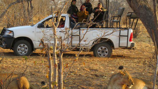 Game Drive Chobe - Botswana