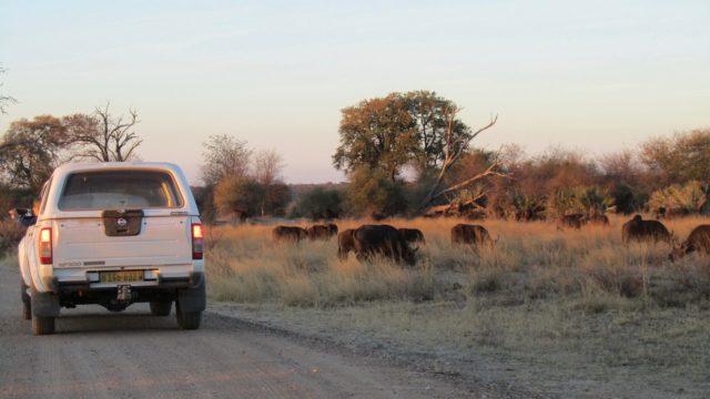 Mahango Park Namibië Rondreis Op Maat Specialist