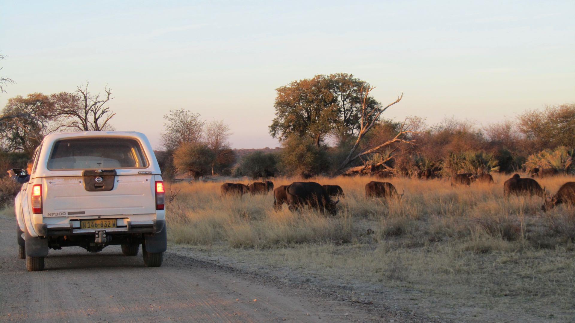 Mahango Park - Namibie