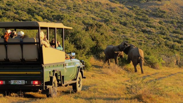 Safari stoeiende olifanten Zuid Afrika Rondreis Op Maat Specialist Noord-Oosten met veel wildlife