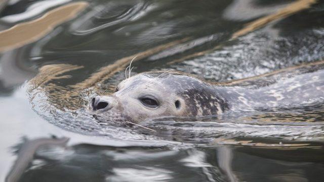 Zwemmen met zeehonden in Plettenberg Bay