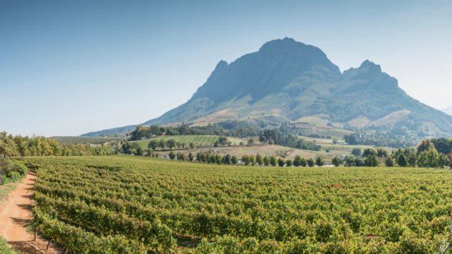 Wijnlanden Zuid-Afrika Rondreis Op Maat Specialist