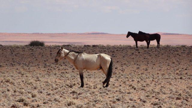 Namib Desert, Aus & Lüderitz Rondreis Op Maat Specialist
