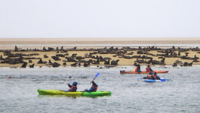 Kayak Tour Walvis Bay - Namibie