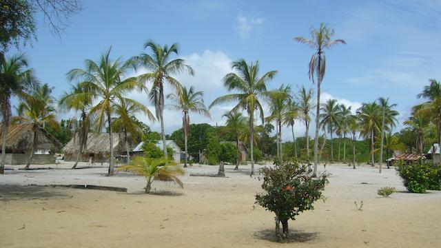 Galibi Palmen Suriname Rondreis Op Maat Specialist