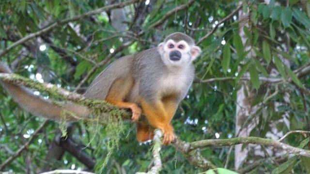 Natuurpark Brownsberg Suriname Kanoen bij Kabalebo Rondreis Op Maat Specialist