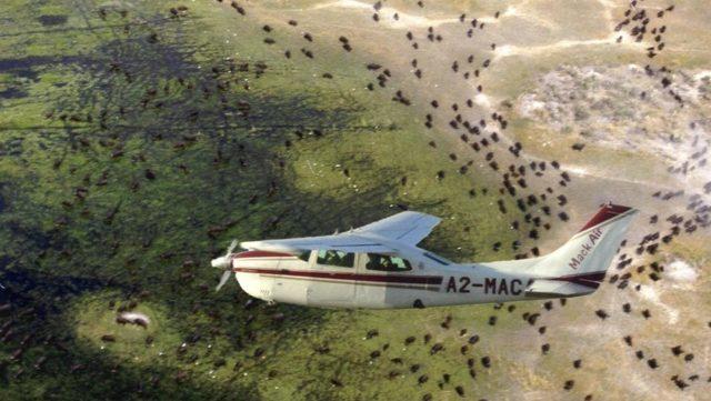 Okavango FDelta Fly In Safari Botswana Rondreis Op Maat Specialist