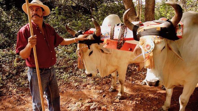 Culturele en rurale dag Carreta Costa Rica Rondreis Op Maat Specialist