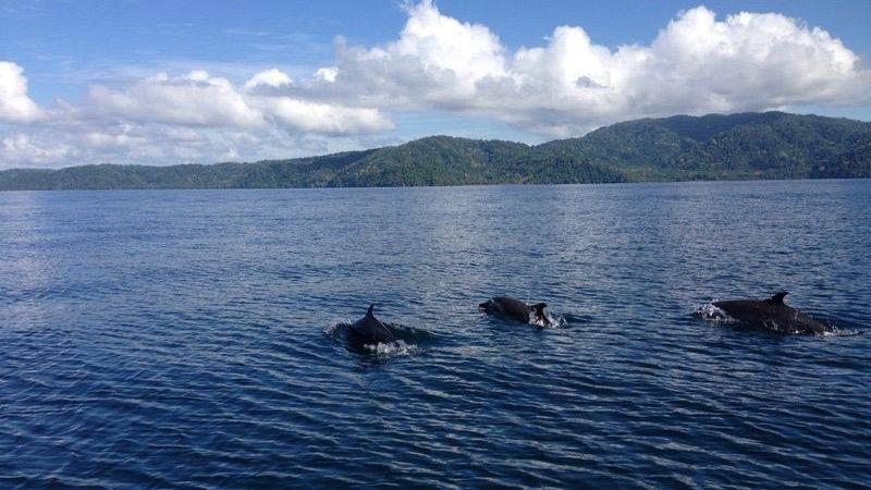 Costa Rica dolfijnen Rondreis Op Maat Specialist