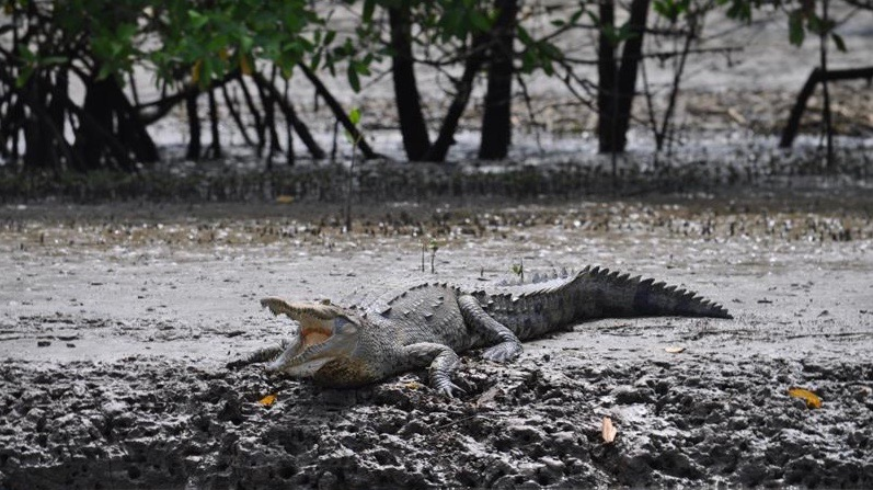 Reizen op maat Costa Rica krokodil
