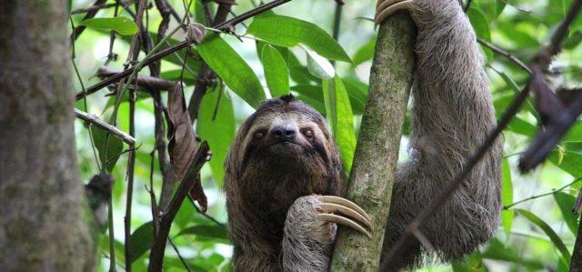 Reizen op maat Costa Rica luiaard