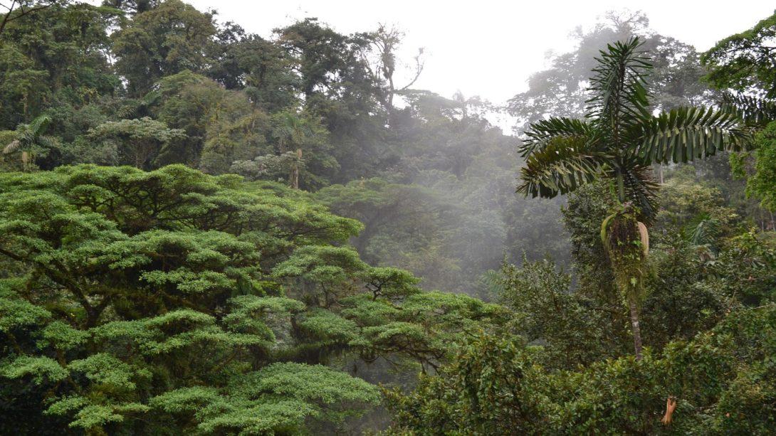 Reizen op maat Costa Rica nevelwoud