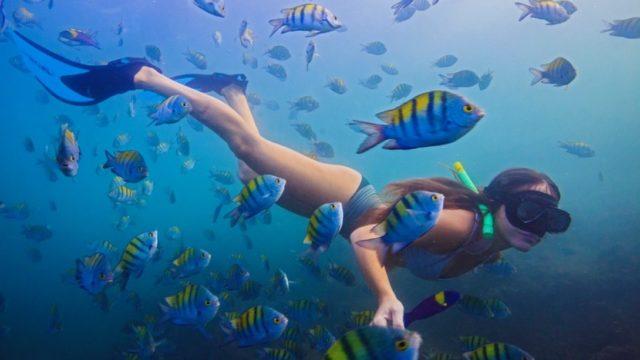 Snorkelen Costa Rica Rondreis Op Maat Specialist