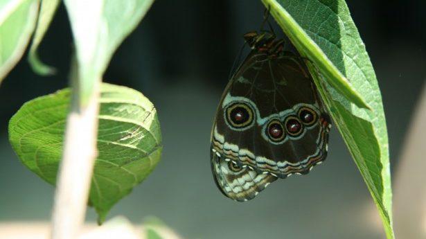 Vlindertuin Monteverde Costa Rica Rondreis op Maat Specialst