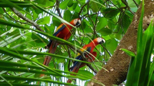 papagaaien Costa Rica Rondreis Op Maat Specialist