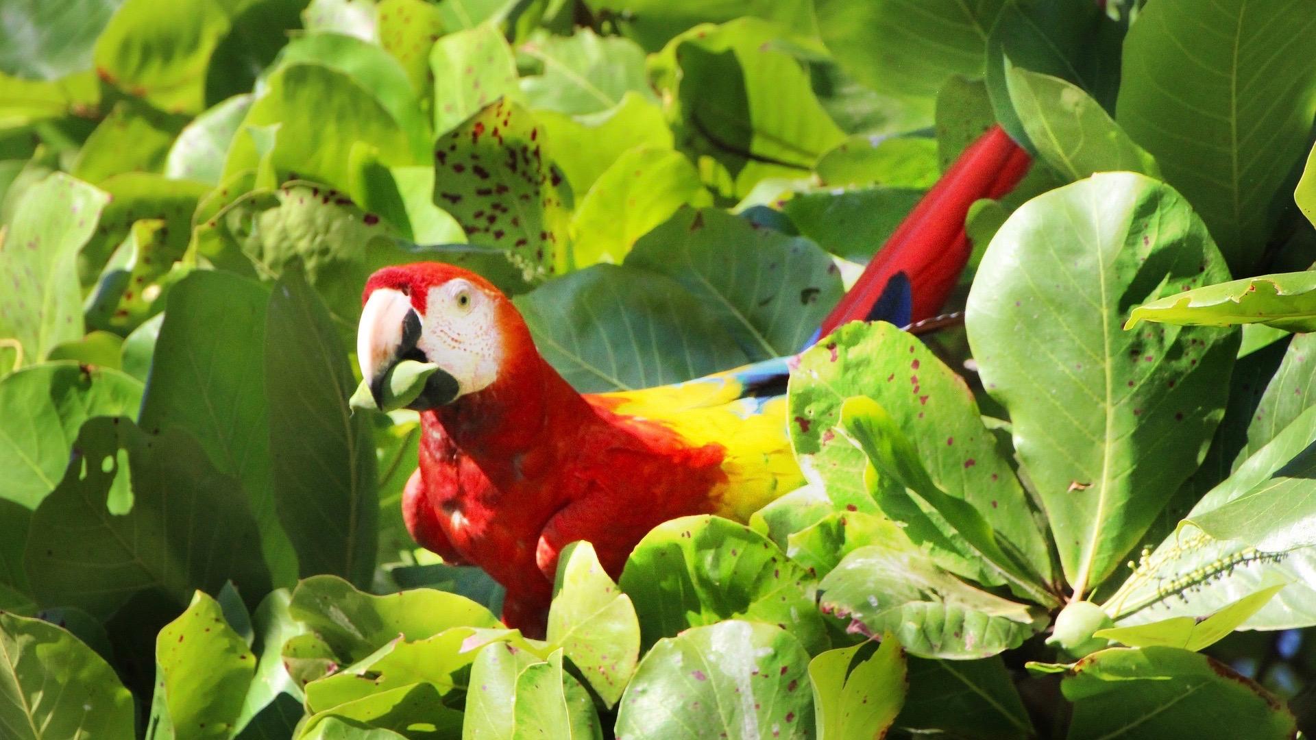 Reizen op maat Costa Rica ara