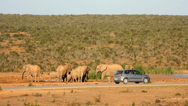 Auto Krugerpark Zuid Afrika Rondreis Op Maat Specialist