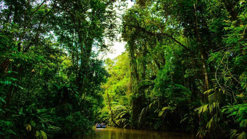 Boottocht Tortuguero Costa Rica Rondreis Op Maat Specialist