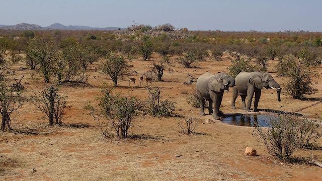 Botswana Tuli-Block Olifanten Zuid Afrika Rondreis Op Maat Specialist
