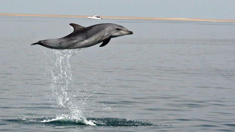 Dolfijn ecocruise in Gansbaai Rondreis Op Maat Specialist