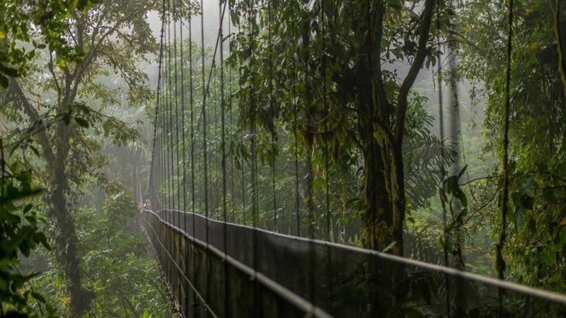 Wandelen over hangbruggen Costa Rica Rondreis Op Maat Specialist