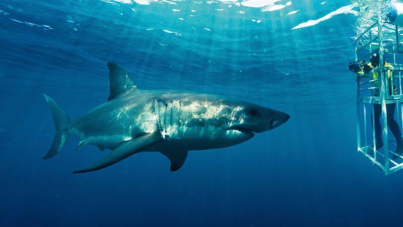 Shark cage Rondreis Op Maat Specialist