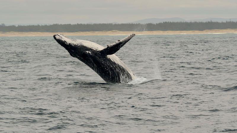 Hermanus walvis Rondreis Op Maat Specialist