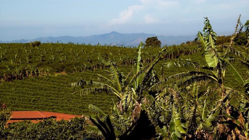 Koffieplantage Doka Costa Rica Rondreis Op Maat Specialist