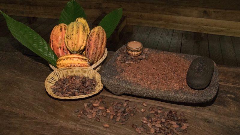 Bezoek een Cacao Plantage TIRIMBINA Costa Rica Rondreis Op Maat Specialist