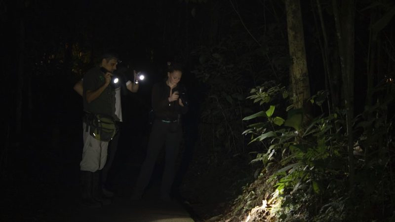 NIGHT-HIKE-TIRIMBINA Costa Rica Rondreis Op Maat Specialist