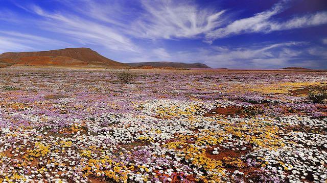 Namaqualand West Kaap Zuid Afrika Rondreis Op Maat Specialist