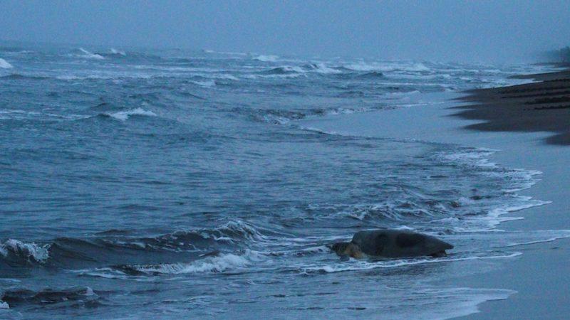 Schildpaddentour bij nacht Costa Rica Rondreis Op Maat Specialist