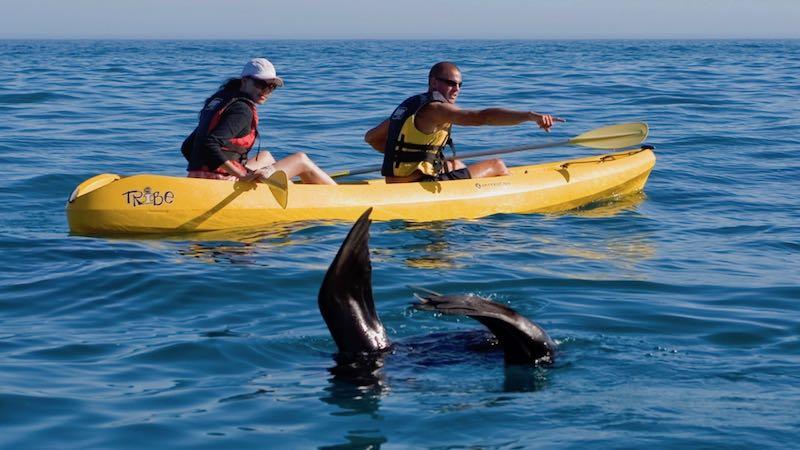Sea Kayaking Hermanus Zuid-Afrika Rondreis Op Maat Specialist